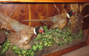 pheasant under glass